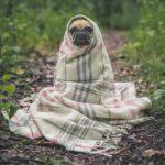 Erkältung und Histaminintoleranz - So linderst du Symptome